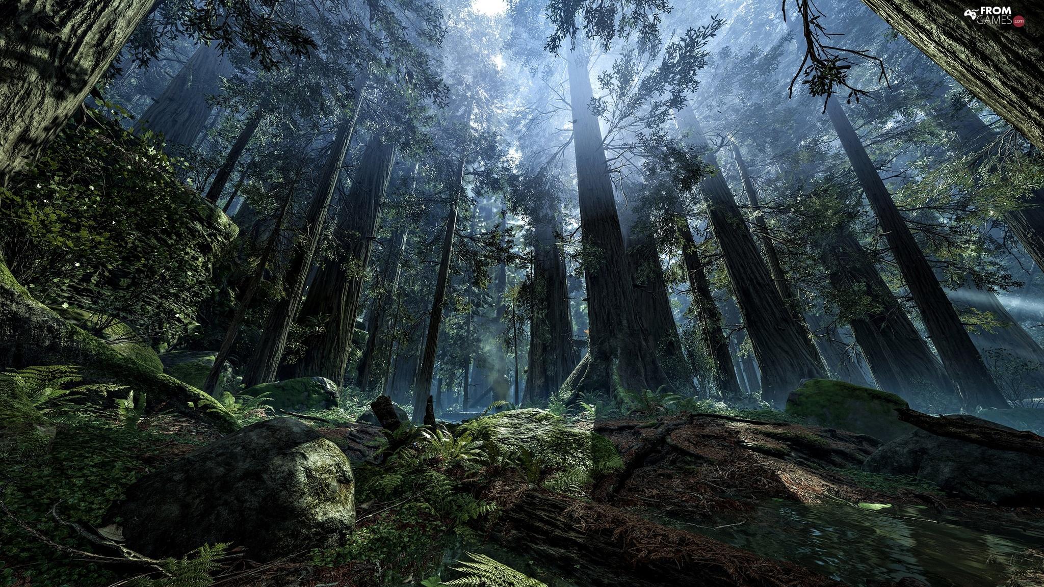 Planet Endor Game Fog Light Breaking Through Sky Forest Star