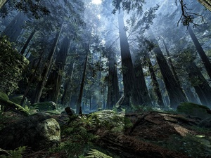 Planet Endor, game, Fog, light breaking through sky, forest, Star Wars Battlefront